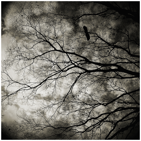 Sheltering Sky.jpg
